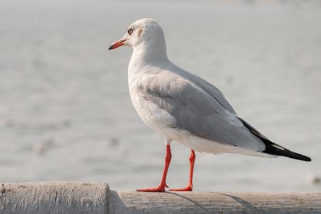 Чайка стоит и смотрит на море.