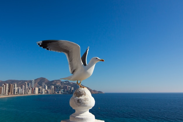 Seagull standing on a wall