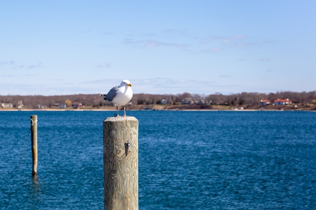 Seagull standing on wooden post by the lake in blue sky.