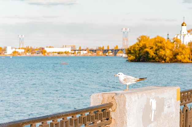 Seagull stands on the fence of city embankment