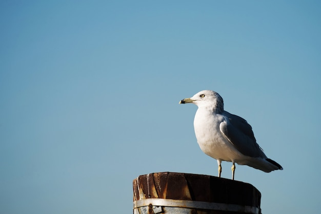Seagull stands on top of a metal pole