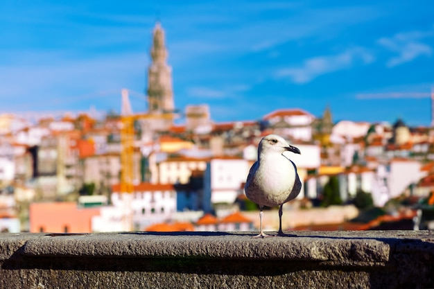 Seagull and torre dos clerigos in lisbon, portugal