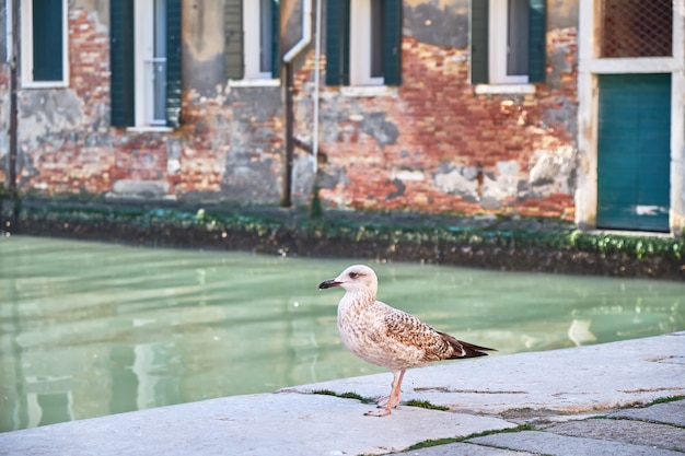 Seagull in venice, italy. sunny day, canal and historical buildings in the background.