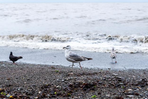 Чайка на пляже черного моря