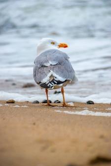 Gabbiano che cammina sulla sabbia in spiaggia