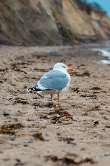 Seagull walking on the sand at the beach