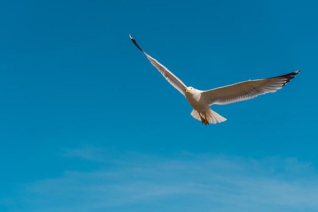 Чайка с большими крыльями, летящими в голубом небе