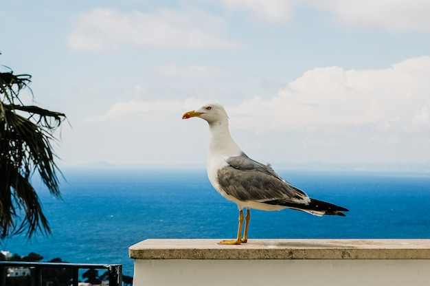 Seagull with blue mediterranean sea.