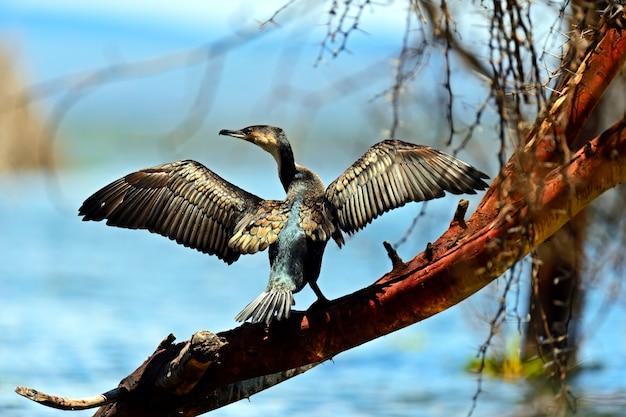 ナイバシャ湖の水上で魚とカモメ