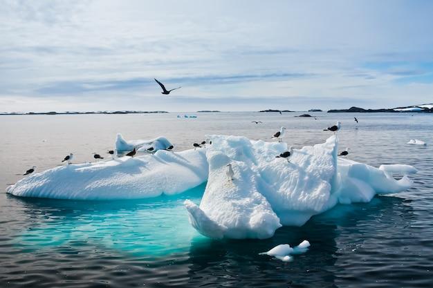 Seagulls in antarctica