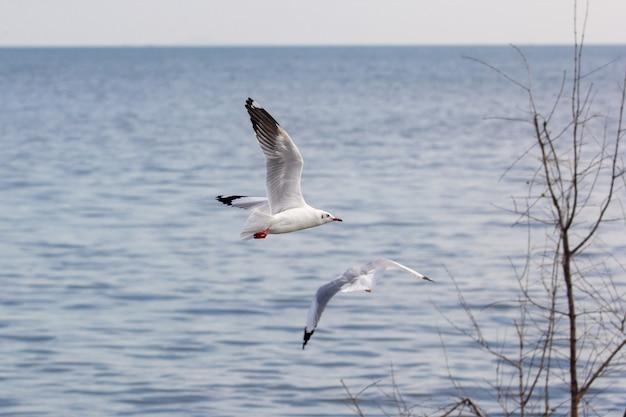 Чайки летают над озером
