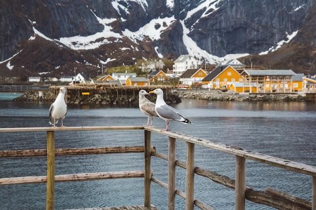 Чайки сидят на деревянных перилах на фоне гор, озера и рыбацких домиков.