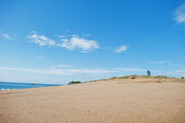 ブルガリアの黒海のサニービーチのカモメ。夏休み旅行休暇。