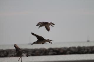 Seagulls  birds  seagulls