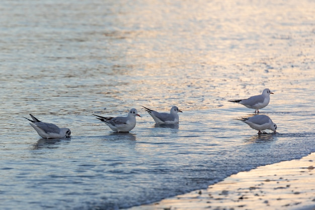 Seagulls eating on the shore of the beach
