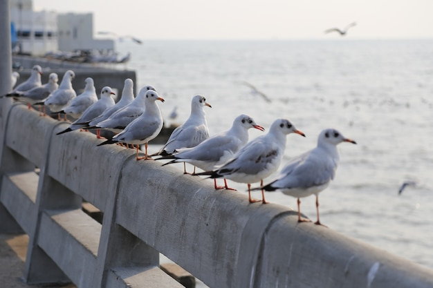 Seagulls escaped the cold weather in thailand.