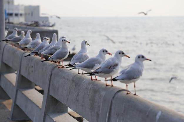 Чайки спаслись от холода в таиланде.