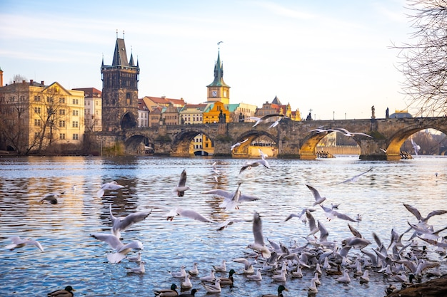 Seagulls in flight against the background of the sights of the old city, charles bridge and view to vltava river, prague castle in prague, czech republic