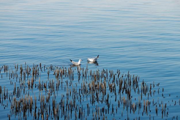 Чайки плывут по воде