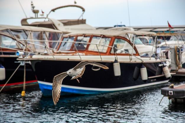 Чайки летают и едят на пристани в стамбуле.