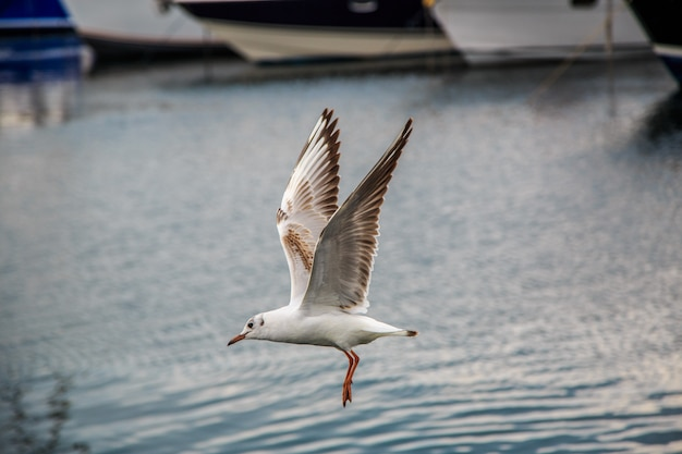 Seagulls fly and eat on the pier in istanbul.