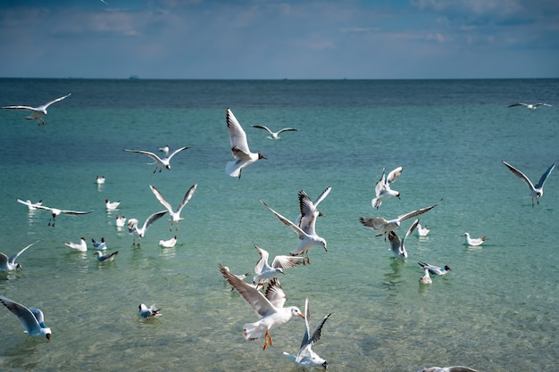 Seagulls fly over the sea surface