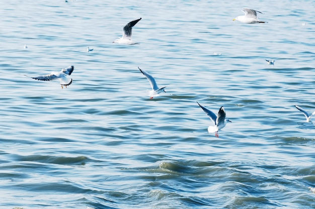 Seagulls fly over sea waves.
