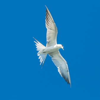 Seagulls flying on blue sky