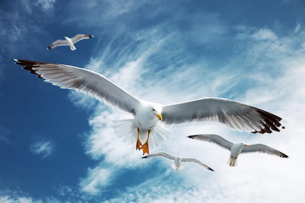 Чайки летают в голубом небе.