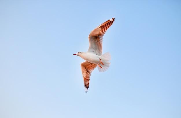 クリアな青空を飛ぶカモメ
