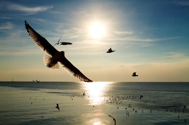 Чайки летают в море вечерним закатом