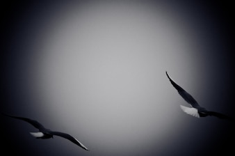Seagulls Flying Over Sea. Black and white photo with film grain effect