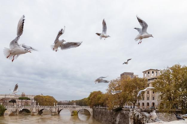 イタリア、ローマ、テヴェレ川の上空を飛ぶカモメ
