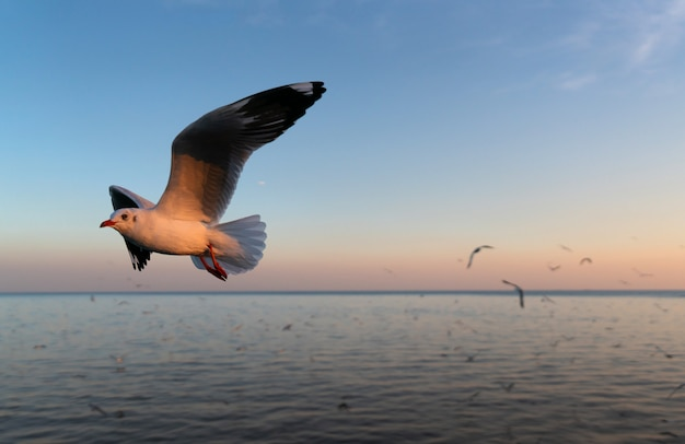 Seagulls flying over the sea at sunset