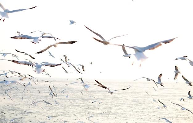 海岸を飛ぶカモメ、動物の自然、マングローブの森、ビーチの夕方