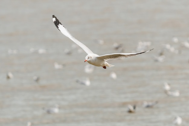 Seagulls flying on sky