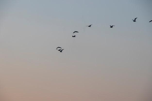 Летящие чайки, закатное небо и морские птицы в грузии