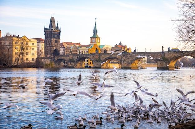 旧市街、カレル橋、チェコ共和国プラハのプラハ城、ヴルタヴァ川の景色を背景に飛行中のカモメ