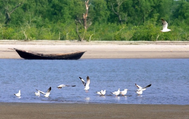 Чайки на морском пляже куаката в бангладеш