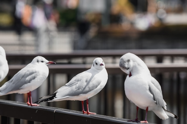Seagulls in japan