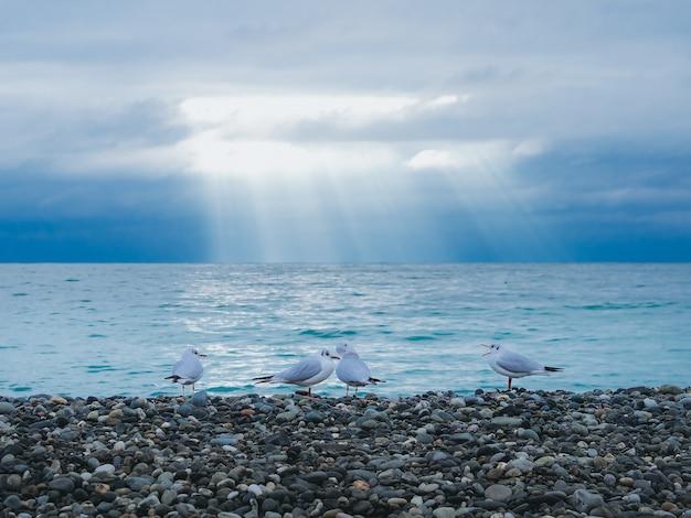 Чайки на пляже. 4 чайки стоят на берегу черного моря