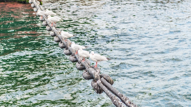 Seagulls resting on a chain