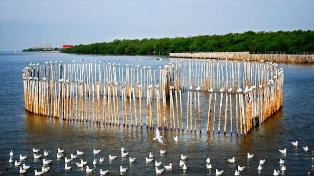 Seagulls standing on heart shape bamboo sticks