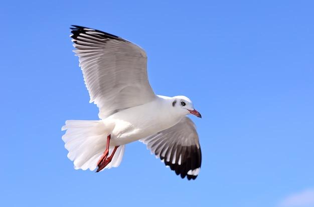 Seagulls