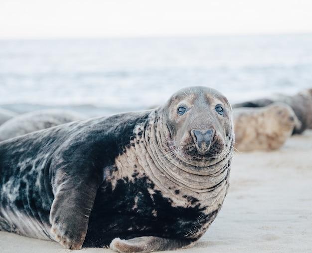 Тюлень на пляже в дневное время