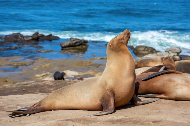 Seal on the shore of the ocean