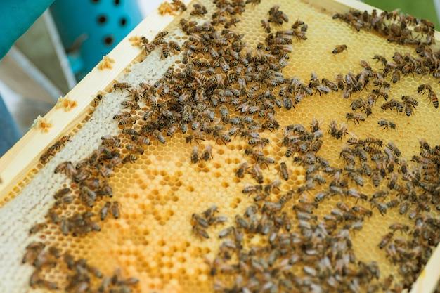 フレームに密封されたミツバチの細胞。アカシアの蜂蜜でいっぱいのハニカム構造を持つ木製の小さなフレーム。