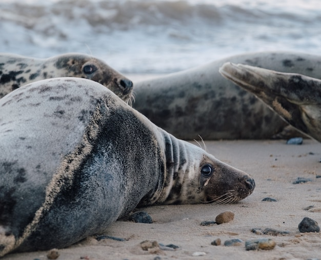 Seals lying down on the beach during daytime