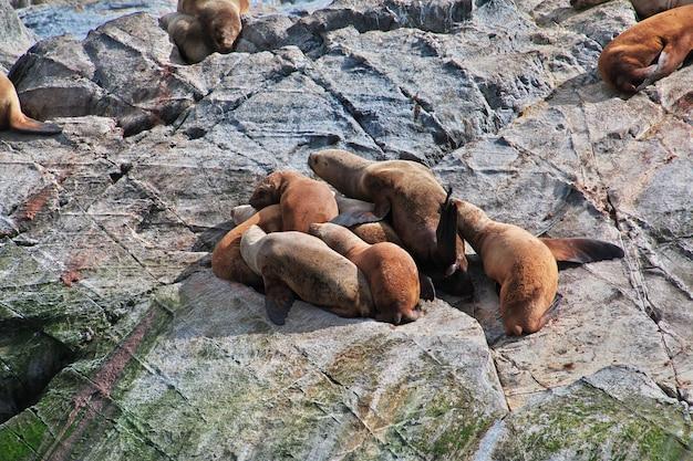 Тюлени на острове в бигле канала закрыть город ушуайя, огненная земля, аргентина