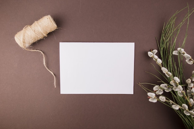 A seals plant branches and white paper sheet